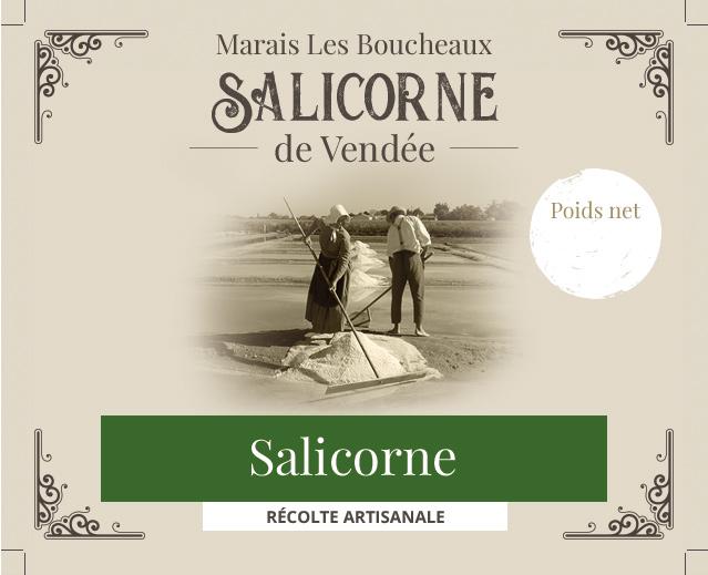 Salicorne